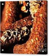 Barnacles And Rust  Acrylic Print