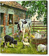 Barnyard Chatter Acrylic Print
