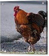Barnyard Rooster Acrylic Print
