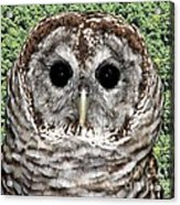 Barred Owl 1 Acrylic Print