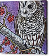 Barred Owl And Berries Acrylic Print