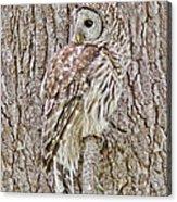 Barred Owl Camouflage Acrylic Print