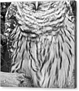 Barred Owl In Black And White Acrylic Print