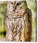 Barred Owl On Moss Acrylic Print