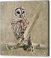 Barred Owl Portrait Acrylic Print
