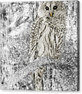 Barred Owl Snowy Day In The Forest Acrylic Print by Jennie Marie Schell