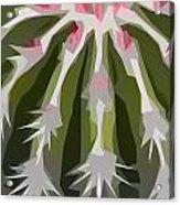 Barrel Cactus Collage Acrylic Print