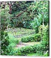 Barriles Garden Tropical Acrylic Print