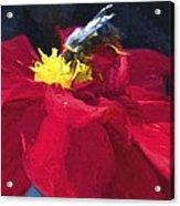 Bartram Bee Acrylic Print