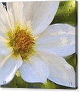 Bartram Bee Flying Acrylic Print