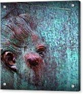 Bas Relief Profile Of Female Head Acrylic Print