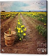 basket with Daffodils Acrylic Print