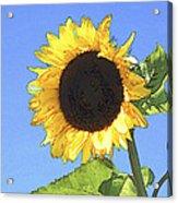 Basking In The Sunlight Acrylic Print