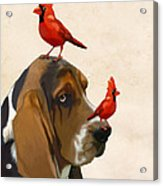 Basset Hound And Red Birds Acrylic Print