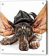 Basset Hound Dog Aviator Acrylic Print