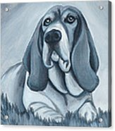 Basset Hound In Black And White Acrylic Print