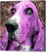 Basset Hound - Pop Art Pink Acrylic Print