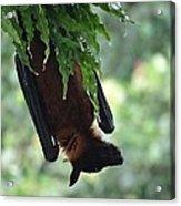 Bat In The Rain Acrylic Print