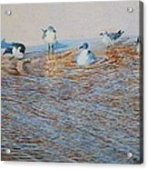 Bath Time Original For Sale  Acrylic Print
