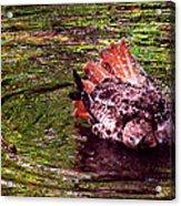 Bathing Red Tailed Hawk Acrylic Print