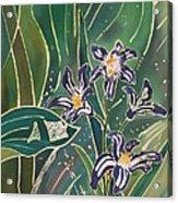 Batik Detail - Pushkinia Acrylic Print