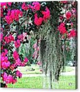 Baton Rouge Louisiana Crepe Myrtle And Moss At Capitol Park Acrylic Print