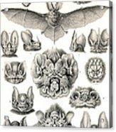 Bats Bats And More Bats Acrylic Print