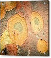 Battered Not Beaten Acrylic Print