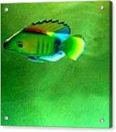 Battery Operated Fish Acrylic Print