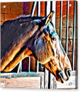 Bay In Stall Acrylic Print
