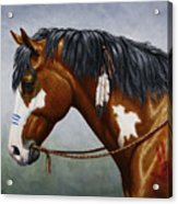 Bay Native American War Horse Acrylic Print by Crista Forest