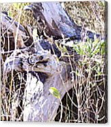 Bayberry And Driftwood Acrylic Print
