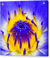 Blue Brilliance Number Two Acrylic Print