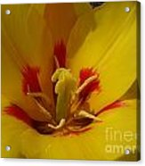 Be Drawn In - Signed Acrylic Print