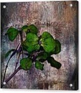 Be Green Acrylic Print