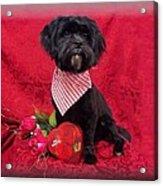Be My Valentine Acrylic Print by Rosalie Klidies