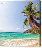 Beach And Palm Tree Acrylic Print