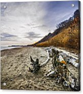 Beach At Scarborough Bluffs Acrylic Print by Elena Elisseeva