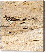 Beach Bird 2 Acrylic Print