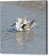 Beach Bird Bath 4 Acrylic Print