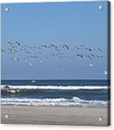 Beach Birds In Flight Acrylic Print