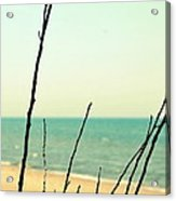Beach Branches Acrylic Print
