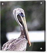 Beach Bum - Pelican Acrylic Print