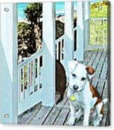 Beach Dog 1 Acrylic Print
