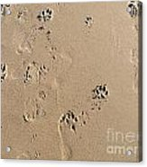 Beach Doggies Acrylic Print