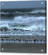 Beach Feast - Outer Banks Ocracoke Acrylic Print by Dan Carmichael