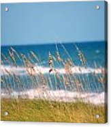 Beach Front 001 Acrylic Print