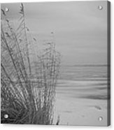 Beach Grass In The Snow Acrylic Print