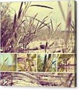 Beach Grass Two  Acrylic Print