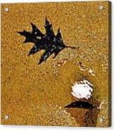 Beach Leafs Acrylic Print